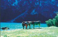 Gudrun pussar ko